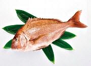 Tai Fish