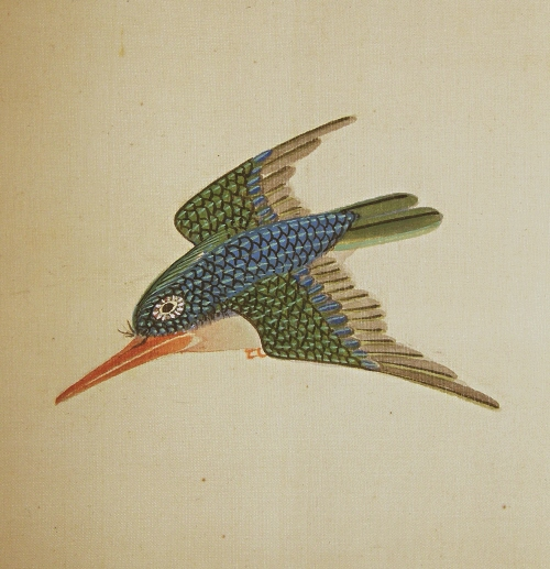 Kawasemi Bird (Kingfisher)