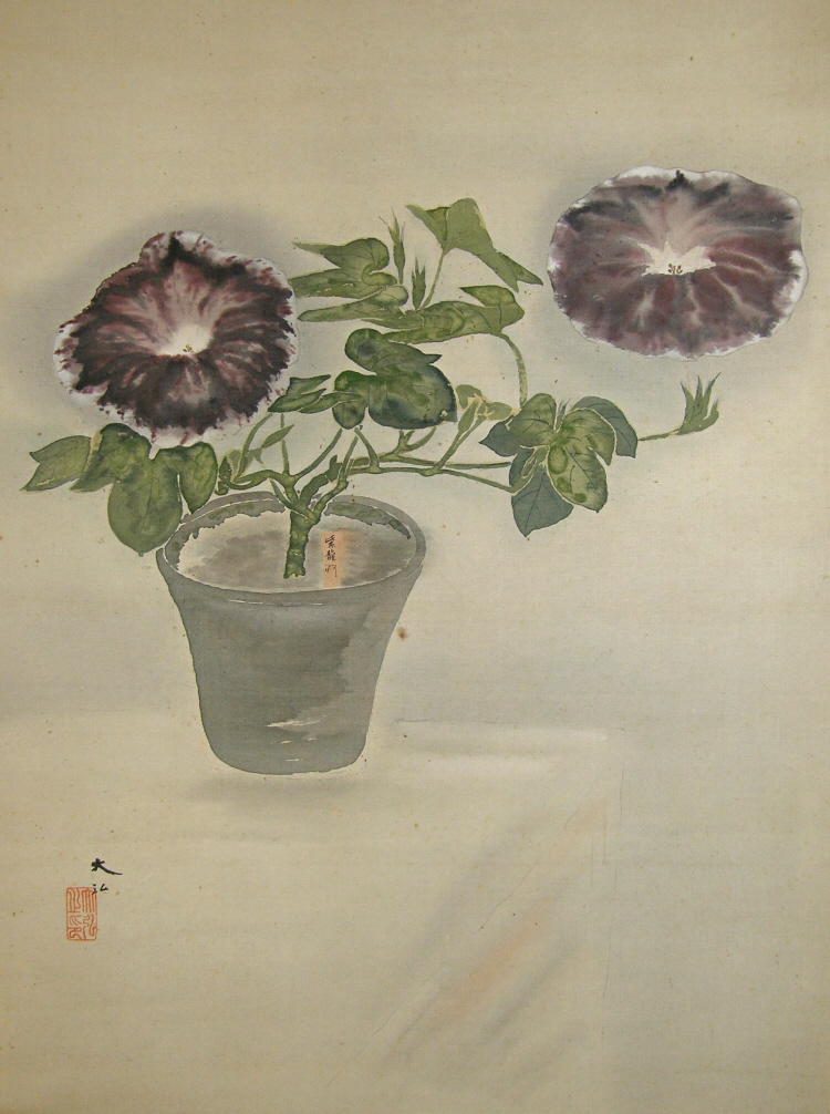 Asagao (Japanese Morning Glory)