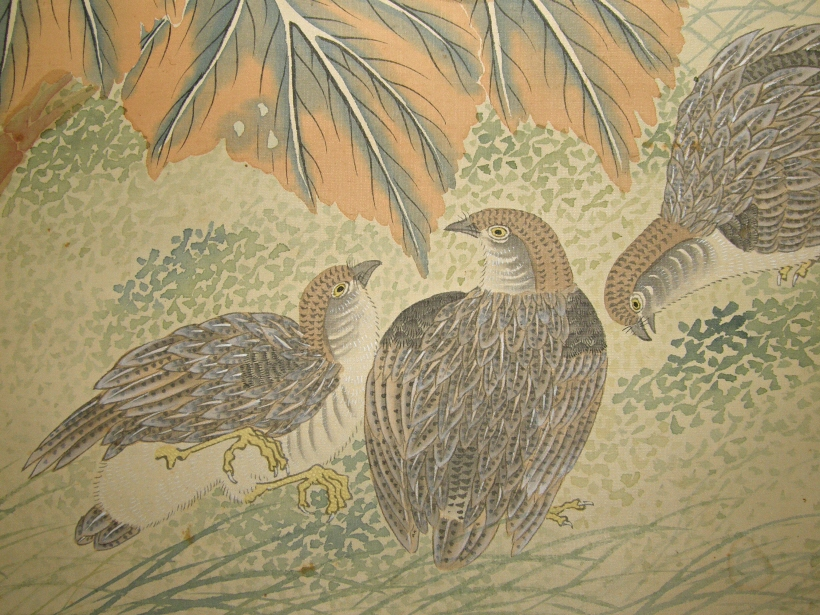 Uzura Birds (Japanese Quails)