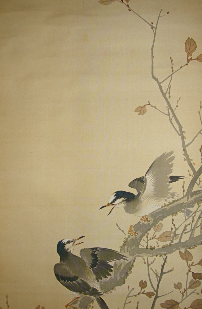 Japanese Jay Birds