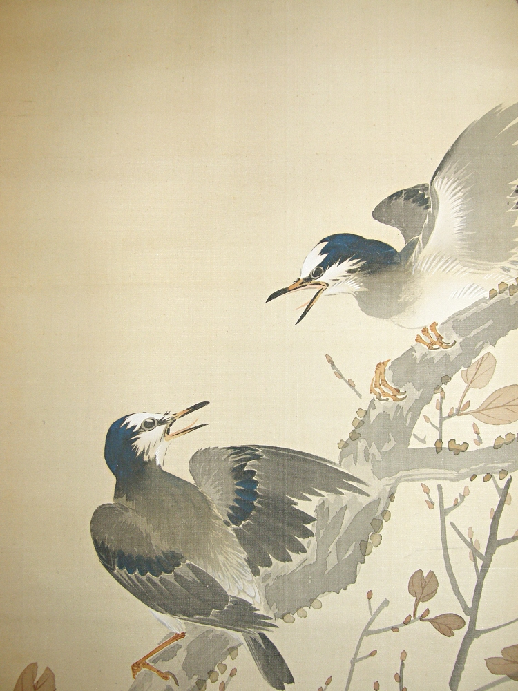 Japanese Jay Bird Couple