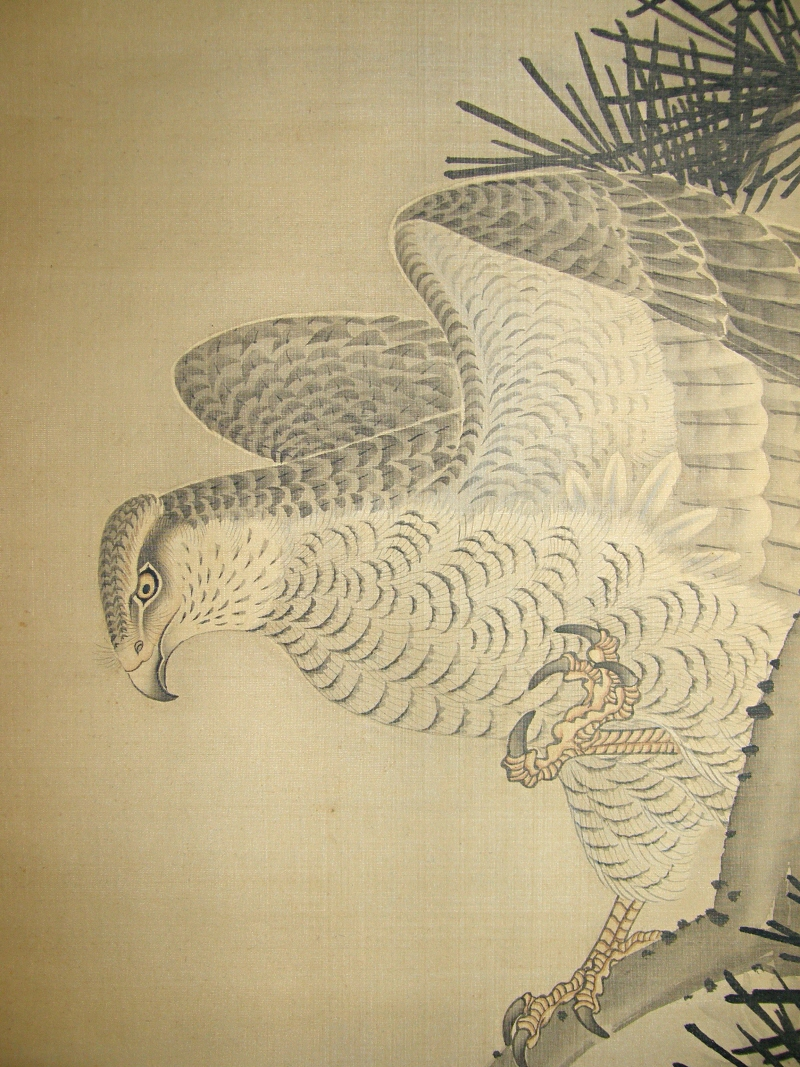 Japanese Taka Bird (Hawk)
