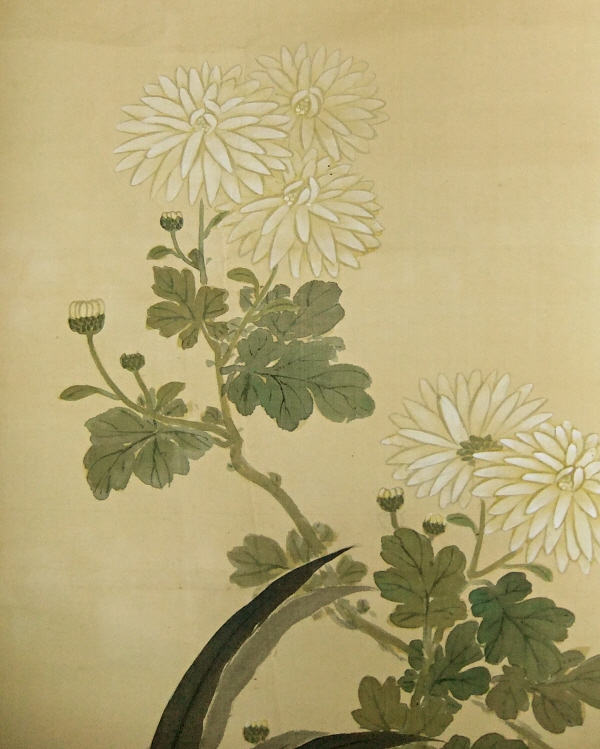 Kiku Blossoms (Chrysanthemum)