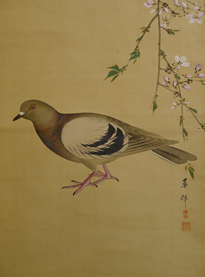 Hato Bird, Japanese Pegion