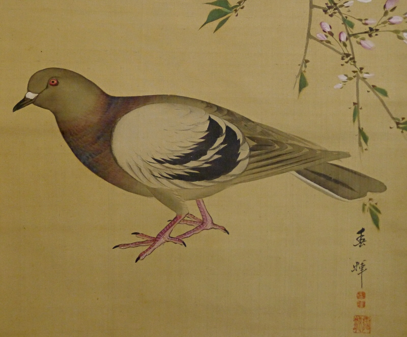 Hato, Japanese Dove Bird